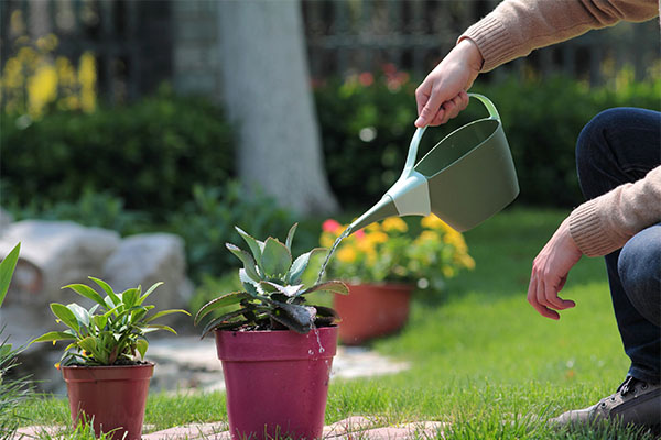 1.2L Plastic Watering Can