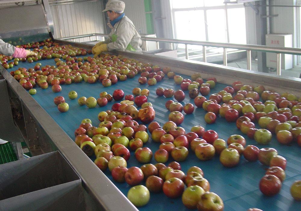 苹果.梨加工生产线