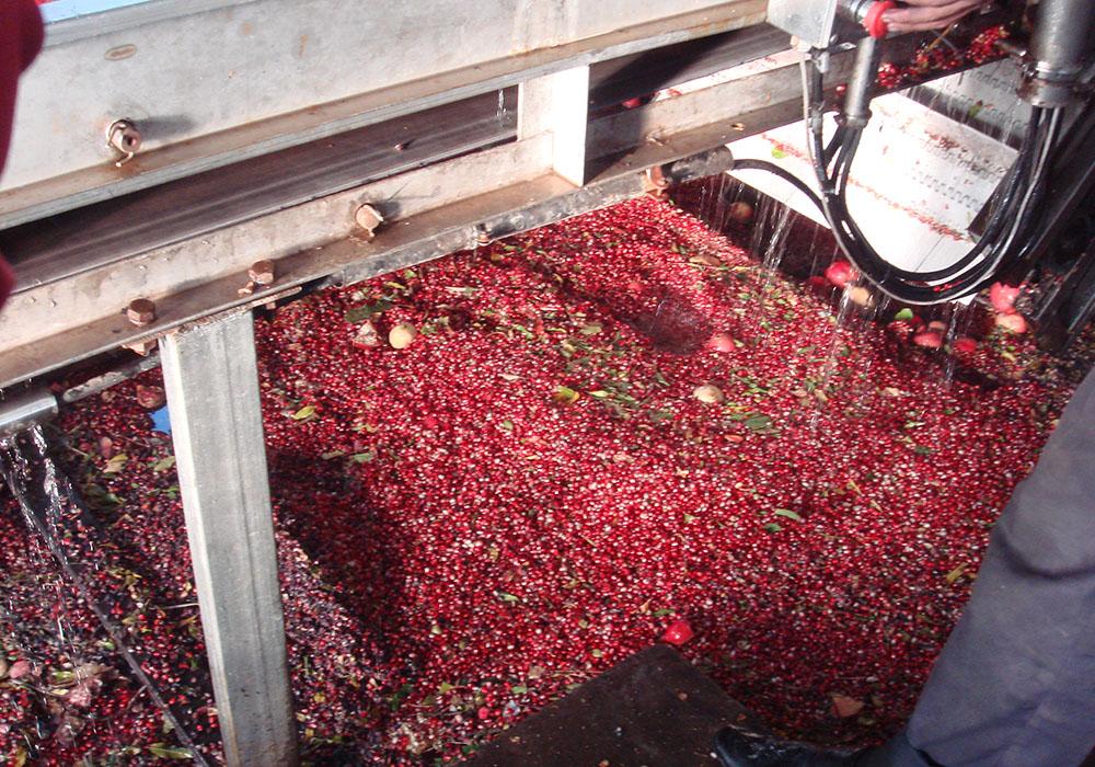 西番莲.番石榴加工生产线