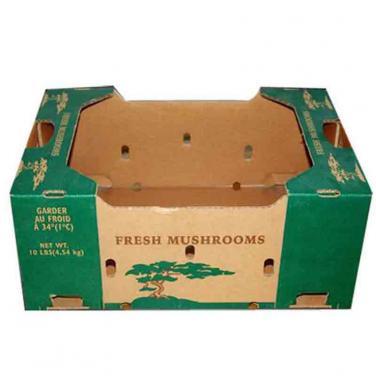 Wholesale Mushroom Carton