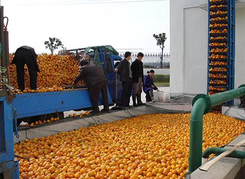 citrus processing plant manufacturer