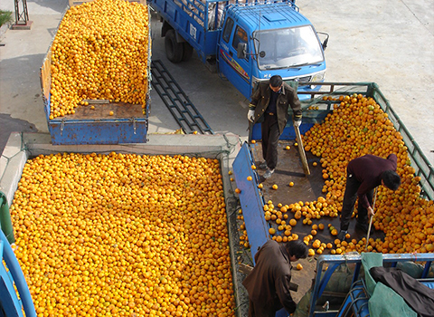 citrus processing machine manufacturer