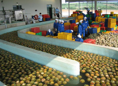 pineapple processing machine manufacturer