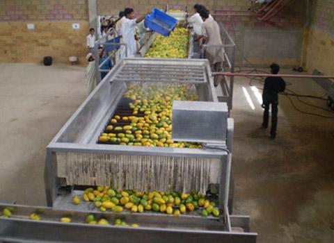 mango juice processing line